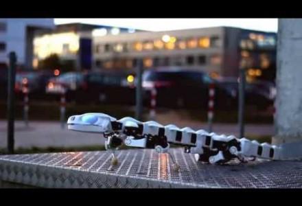 Salamander-Roboter